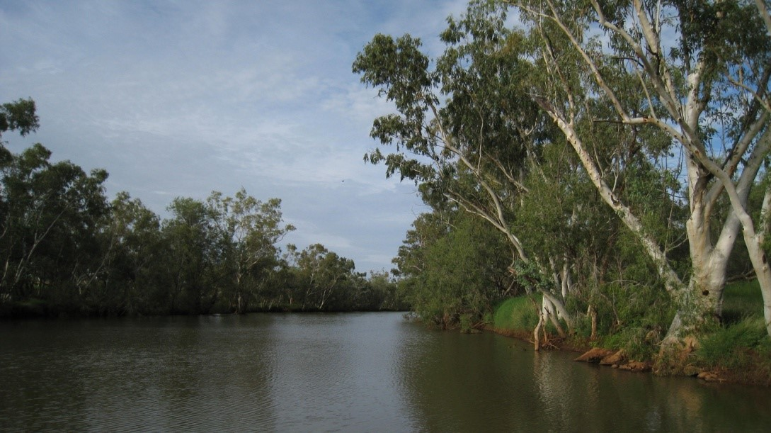 Australian river bank lined with trees
